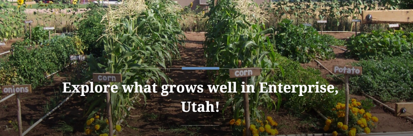 Explore What Grows Well in Enterprise